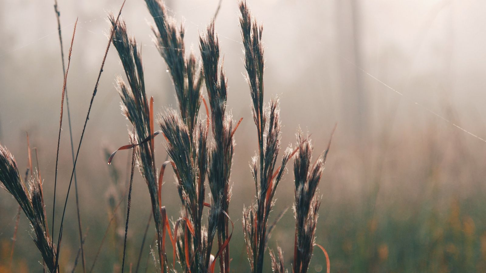 Closeup of tall grass at Shell Landing Golf Club